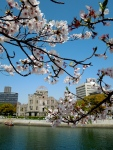 Cherry Blossoms with the A-bomb dome in the background.